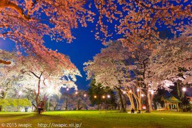 城山公園の夜桜(2014)