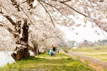 紫波町 五郎沼の桜