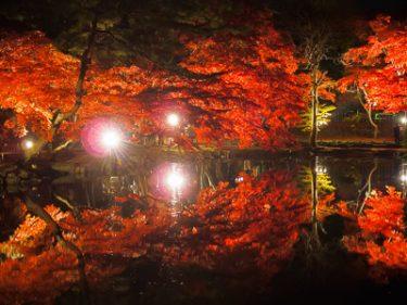 盛岡市中央公民館の紅葉ライトアップ