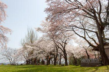 一関市 釣山公園の桜