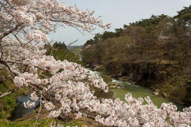 一関市 厳美渓の桜