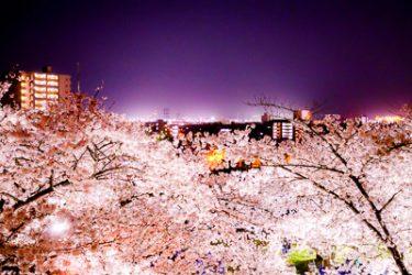 盛岡市 盛岡城跡公園(岩手公園)の夜桜