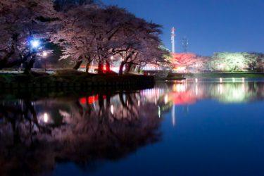 盛岡市・高松の池(高松公園)の夜桜